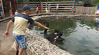 Летний день в мини-зоопарке_2