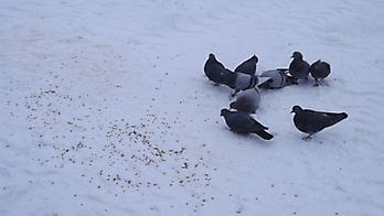 экскурсия кормление птиц 18.01.2018_3