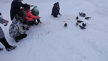 экскурсия кормление птиц 18.01.2018_5
